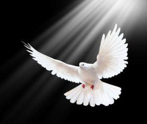 Pentecostés , una nueva efusión del Espíritu Santo